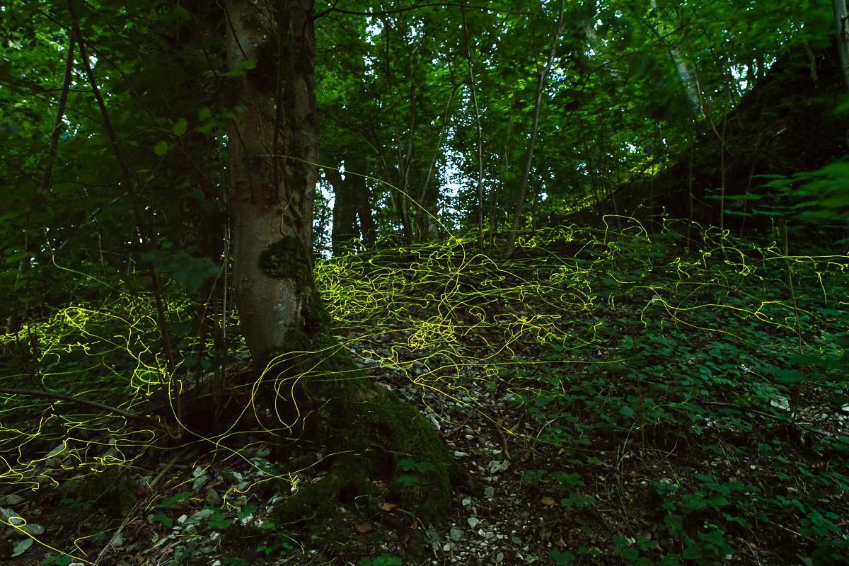 Leuchtspuren von Leuchtkäfern im Wald